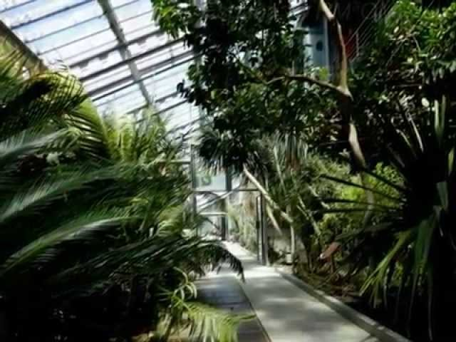 Real Jardin Botánico . Madrid . España
