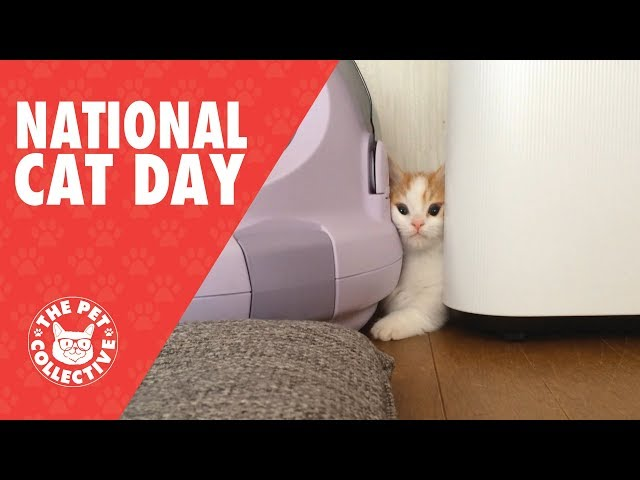 Cute Cats Video Compilation 2017 | National Cat Day!