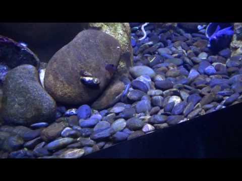 Ripley's Aquarium of Canada March 2017