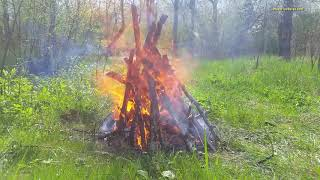 Pleasant sound of bonfire and nature