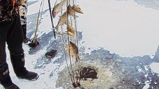 ЗИМНЯЯ РЫБАЛКА на ХАПУГА ХЛОПОК c Fisherman DV 27 RUS поймали ЗМЕЕГОЛОВА