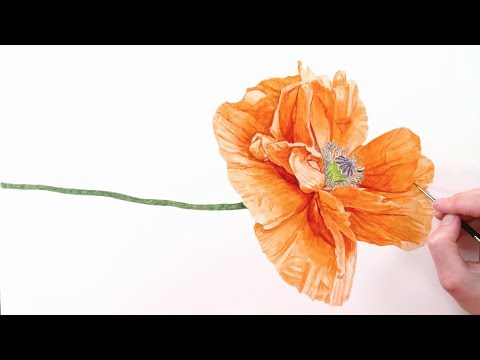 How to paint realistic papery poppy petals in watercolor with Anna Mason