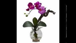 Cành Hoa Trắng -Phạm Duy -Hòa Tấu Guitar -Orchids in Vases -HyVan