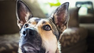 Bomb Sniffing Dogs Can Detect Prostate Cancer