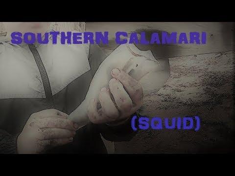 How to clean squid (Southern calamari)