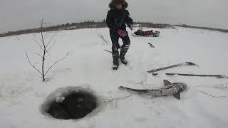 Рыбалка НАЛИМ Такое мы видим впервые