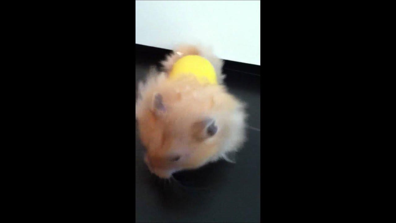 Free Hamster Tube
