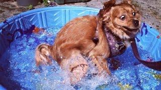 Самые дорогие и редкие собаки мира. Топ 10