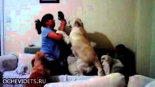 Psy bronią dziecko przed matką z kapciem.