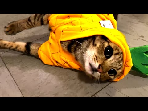 Must Watch Cat Videos! Cute and Funny Cats ?