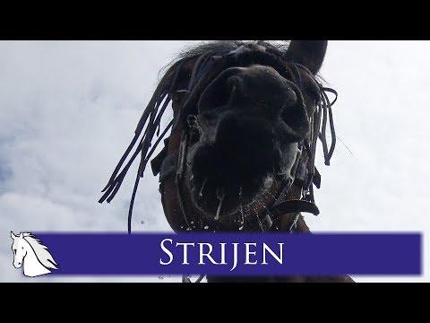 Outdoor Zuid-Holland - Weekvlog - * Hart voor Paarden *