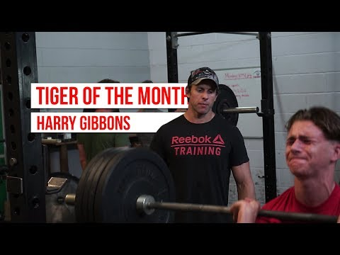 Tiger Of The Month | Harry Gibbons