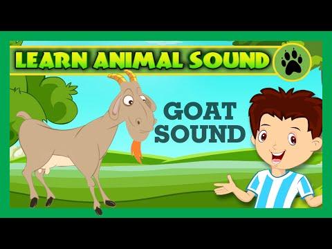 Animal Sound for Children   Goat Sound, Camel Sound, Pig Sound   Kids Hut