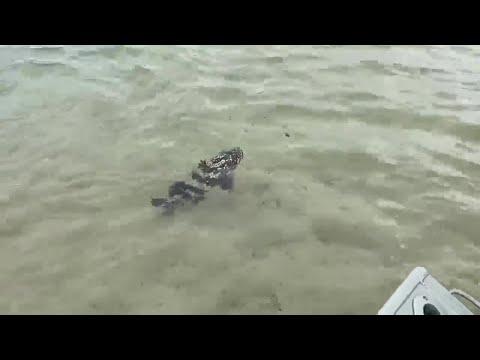 Sandon River Fishing For Food!!!