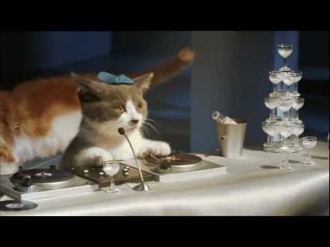 Les chatons de Bouygues Telecom font le buzz sur la toile !