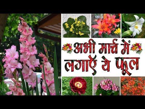 अभी मार्च में लगाइये ये वाले फूल , Common Flowers to Plant in March