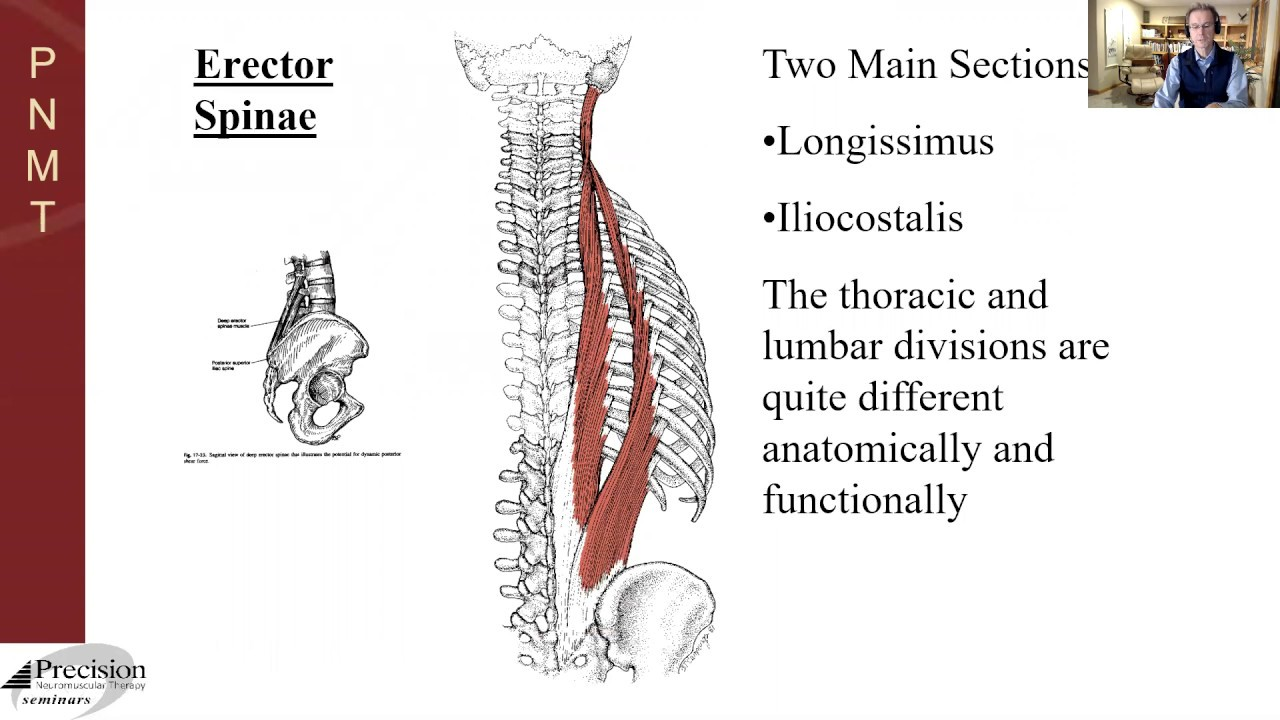 Pnmt Thoracic Spine Anatomy Youtube