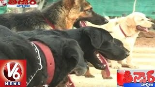 dog daycare centers in hyderabad   fun places for dogs   teenmaar news   v6 news