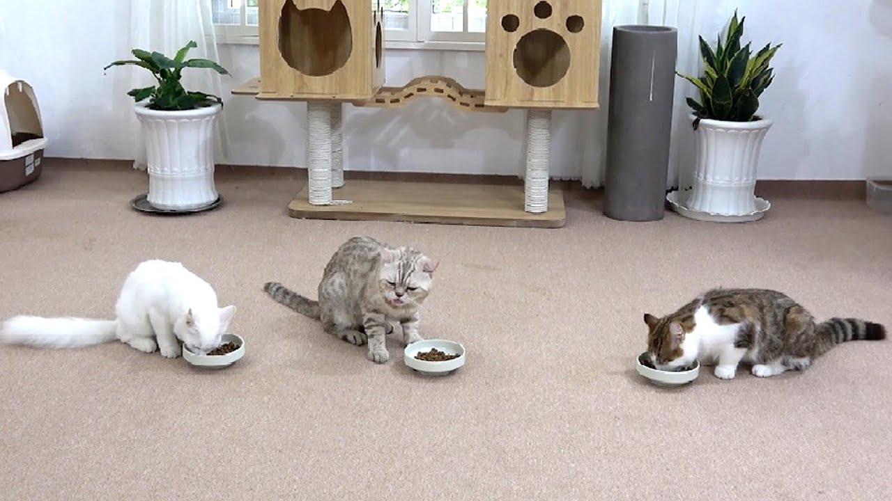 gluttonous cats - Funny cast