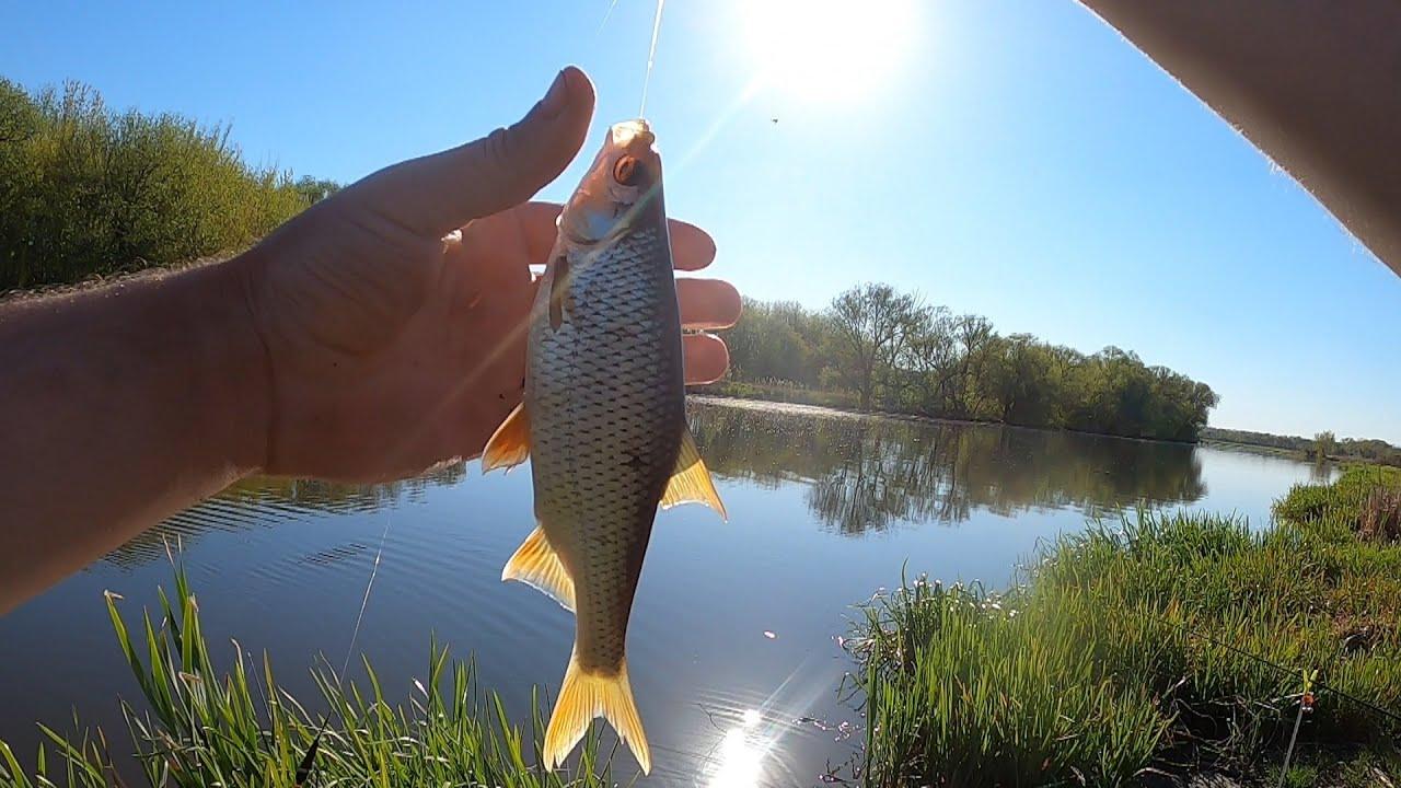 Риболовля на фідер біля села Могилівка