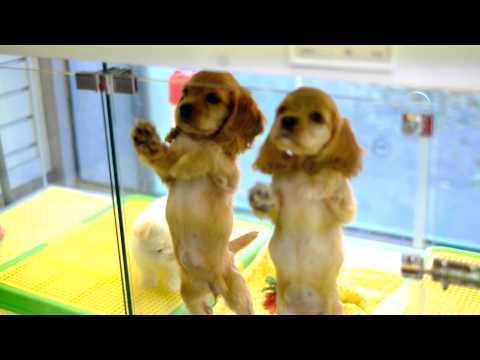 귀여운 강아지 애교 cute dog video