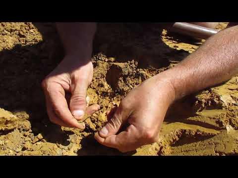 Gold prospecting , Mining .