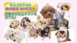 2014年9月13日(土)、ペットショップCoo&RIKU東大阪店グランドオープン...