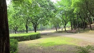 서초문화예술공원에서의  아침 산책ㅡ건강프로젝트의 지속적…