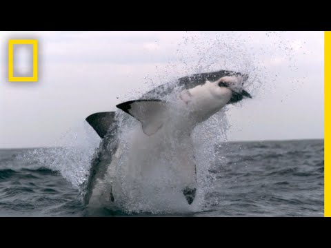 Western Australia's Shark Attack Causes | SharkFest