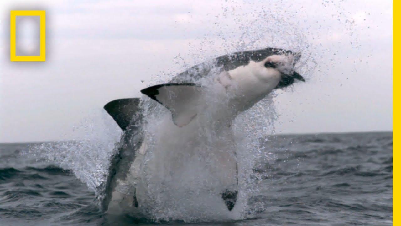 Western Australias Shark Attack Causes | SharkFest