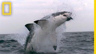 Western Australia's Shark Attack Causes   SharkFest