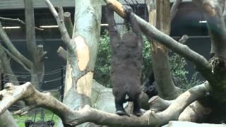 Artis dierentuin
