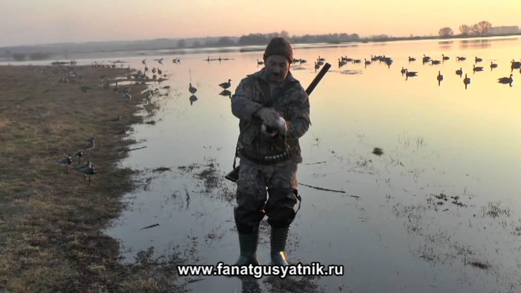 Охота на гуся, Видео уроки онлайн бесплатно