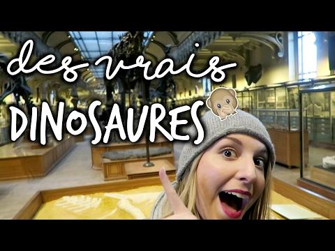 On visite le Museum d'Histoire Naturelle et la galerie de paléonthologie