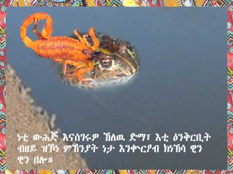 """""""the-frog-and-the-scorpion""""-english-version-with-tigrinya-subtitles"""