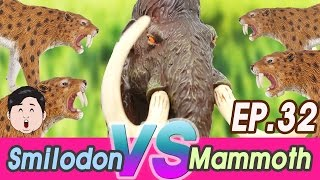 [EN] #32 An Extinct Cenozoic Animals story, Wolly Mammoth VS Smilodon, Collecta figures [cocostoy]