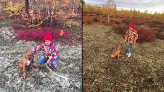 Личный опыт владения собакой амстафф - девочка, возраст 4 месяца!