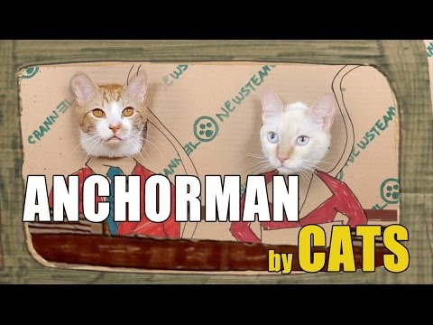 Anchorman Remade by Cats
