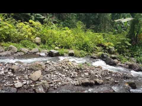Nature in malabo Equatorial Guinea