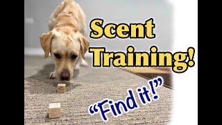 Dog Training Tutorial: Scent training!