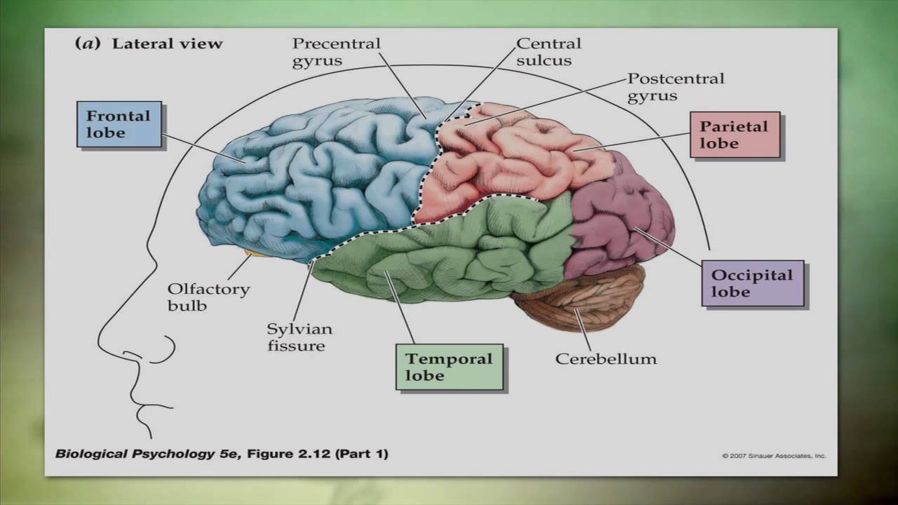 hight resolution of tbi head diagram