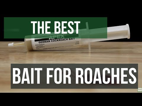 The Best Gel Bait For German Cockroaches Guaranteed