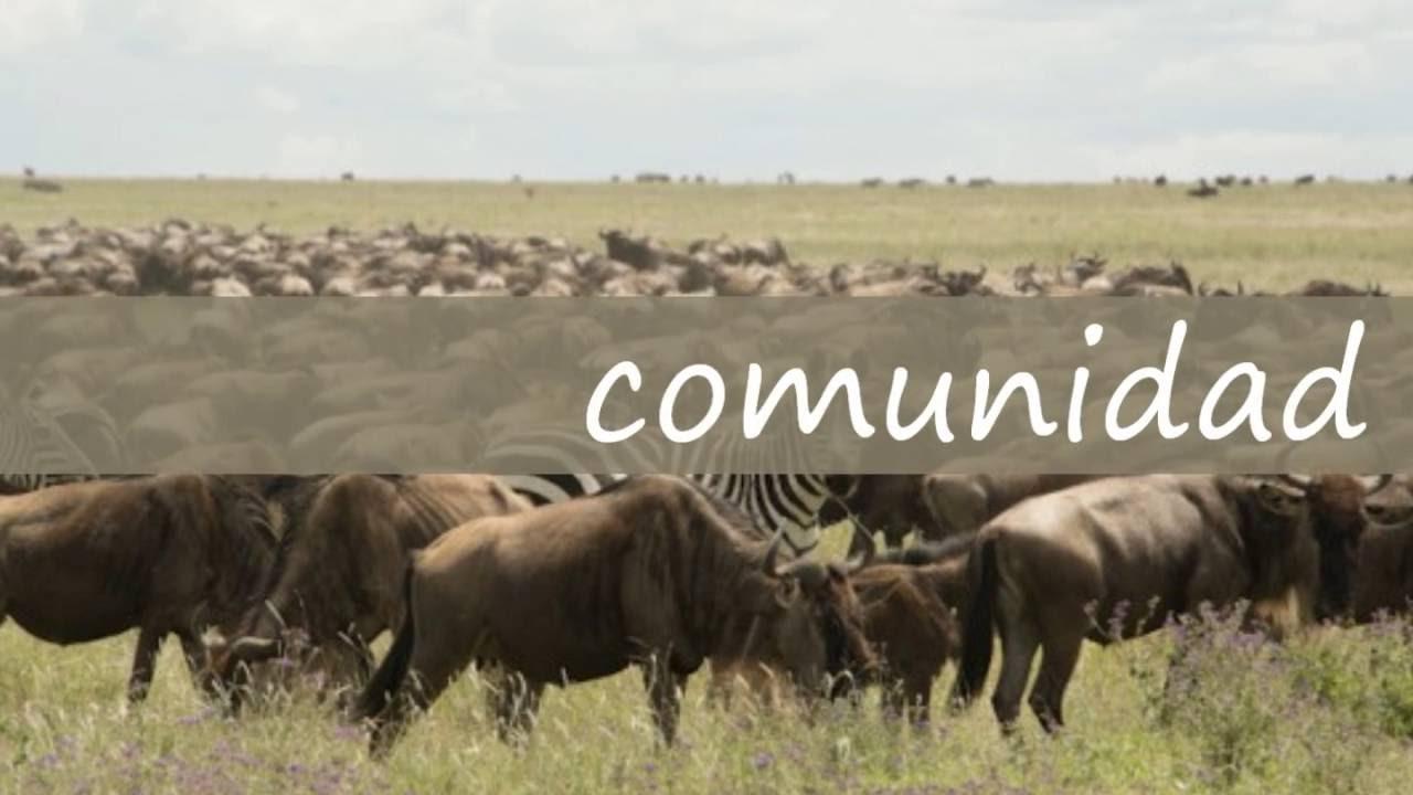 Conceptos individuo, poblacion y comunidad.wmv - YouTube
