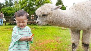 국민이 동물원 가서 알파카 말 앵무새 함께 놀아요 zoo outdoor playground with baby | 말이야와아이들 MariAndKids