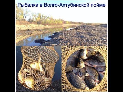 FishStyle Волгоград Рыболовный форум Волга, Ахтуба