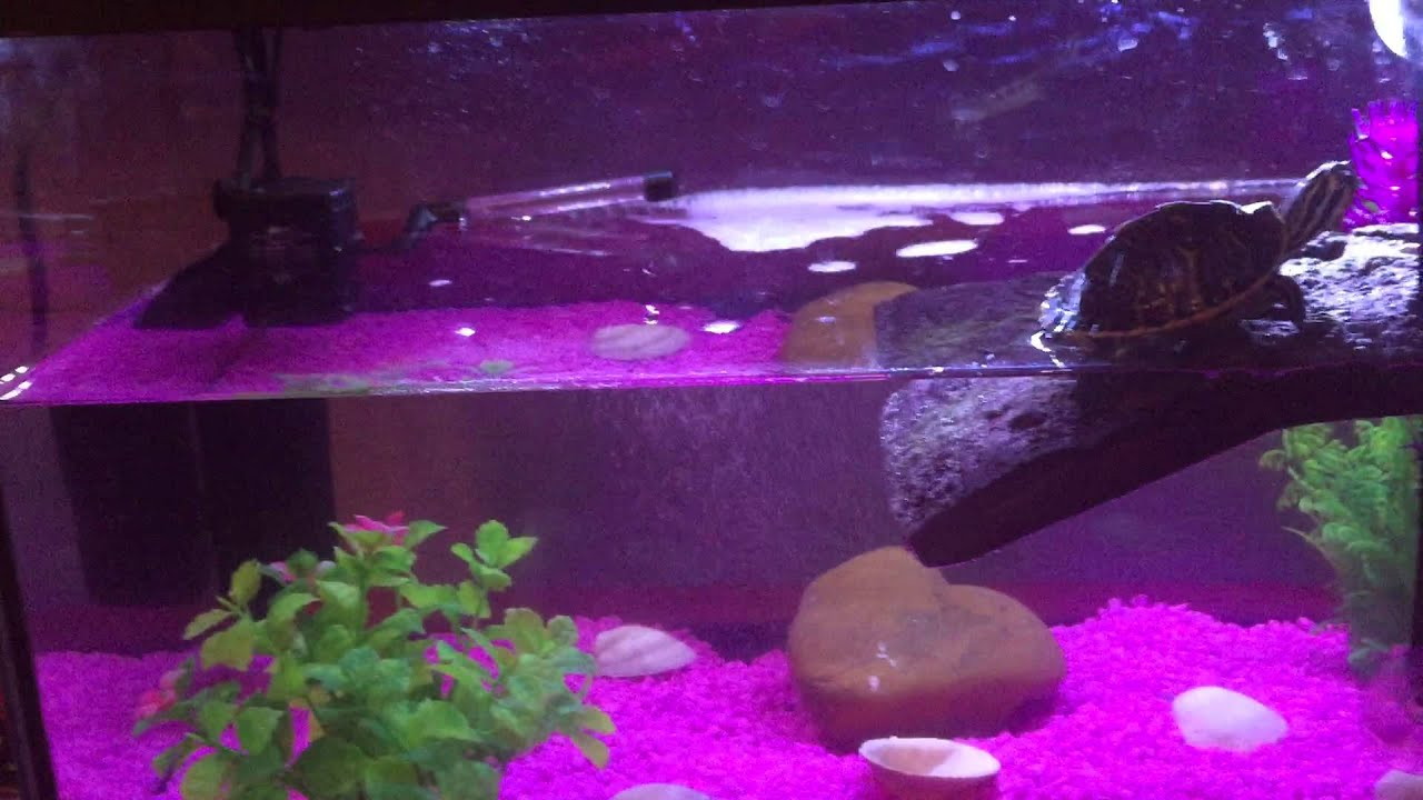 Acuario de tortugas y peces dom sticos acuario casero for Acuario tortugas