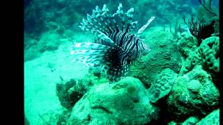 Cuba Lionfish Tracking Underwater - July 2012