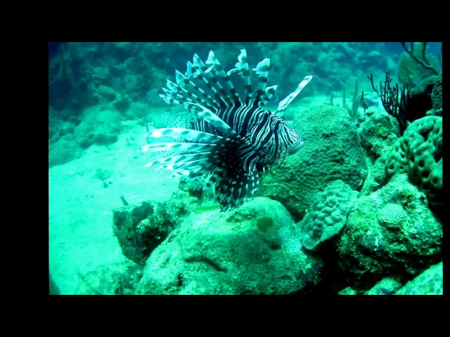 TRACKING LIONFISH IN CUBA
