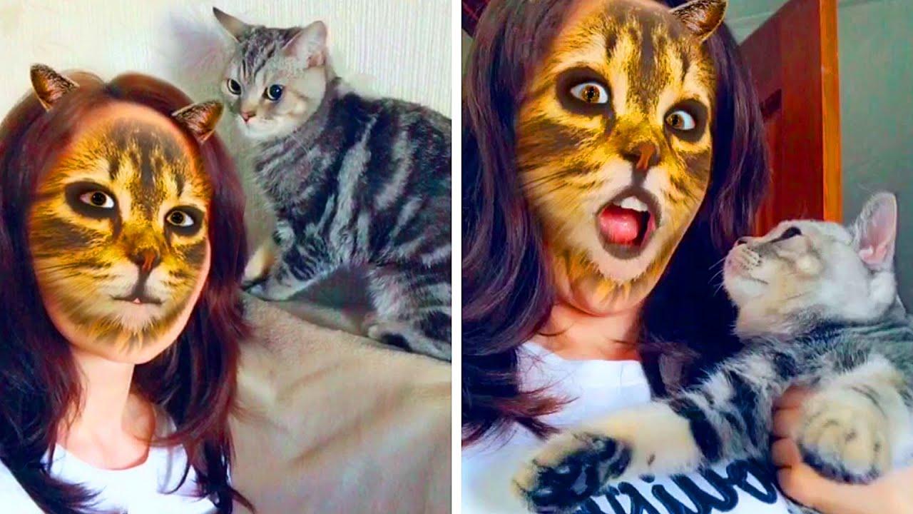 لماذا تخاف القطط من فلتر الصور الذي يشبهها (لأنها تعتقد أنك قط أيضا)