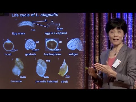 Reiko Kuroda: Mirror-image animals - mechanical manipulation and a point mutation